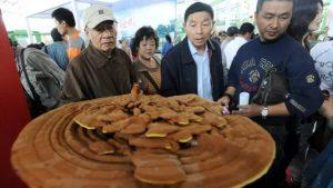 китайская медицина грибы