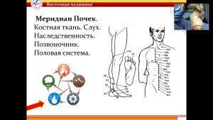 почки восточная медицина