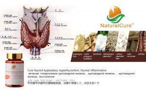 китайская медицина щитовидная железа